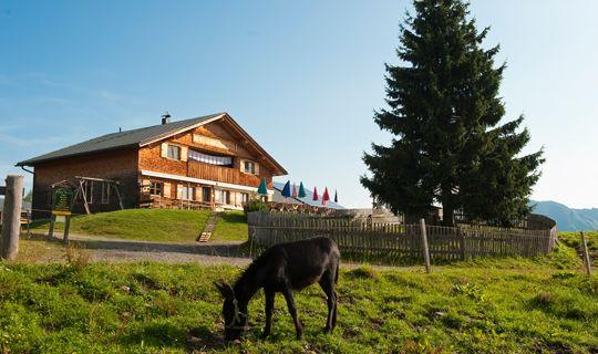 Alpe Rona auf dem Hochplateau Tschengla - Buerserberg Vorarlberg