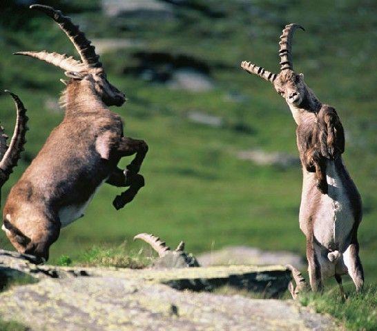 NationalparkRegion Hohe Tauern - Großglockner Bild für Fotogalerie - Hohe Tauern - Großglockner Kaernten