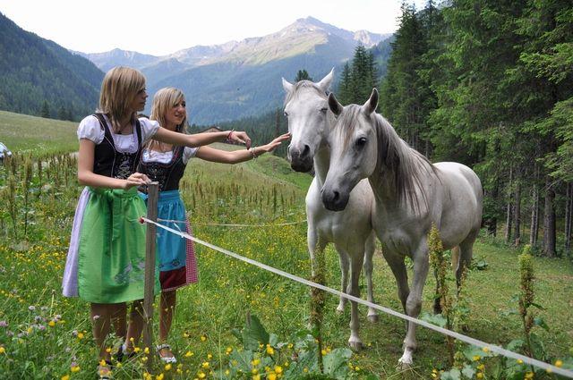 Pferde im Winkeltal - Außervillgraten Tirol