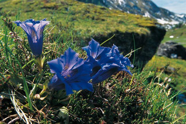 Eine Menge grün und klare Luft - ein Ort zum Entspannen - Angath Tirol