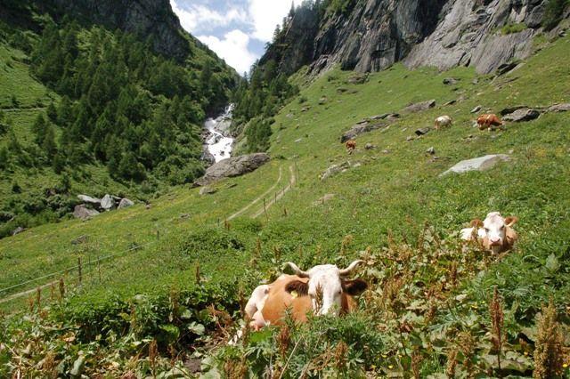 Almleben - Praegraten am Großvenediger Tirol