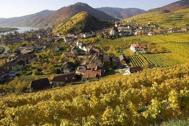 Dem goldenen Herbst... - Spitz Lower Austria