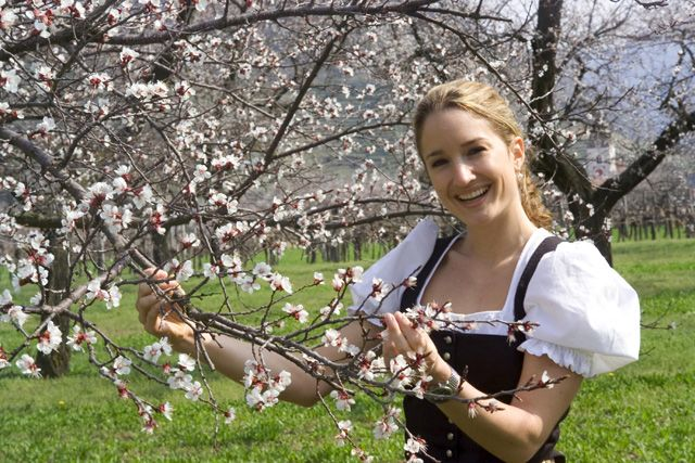 Doch der Winter bringt uns auch Sehnsucht nach dem Frühling. Ein paar warme Tage reichen, um die Marillenbäume zum Blühen zu birngen. - Spitz Niederoesterreich