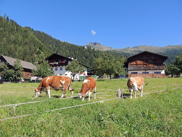 Hausansicht mit Kuehen - Oberthalerhof Thurn