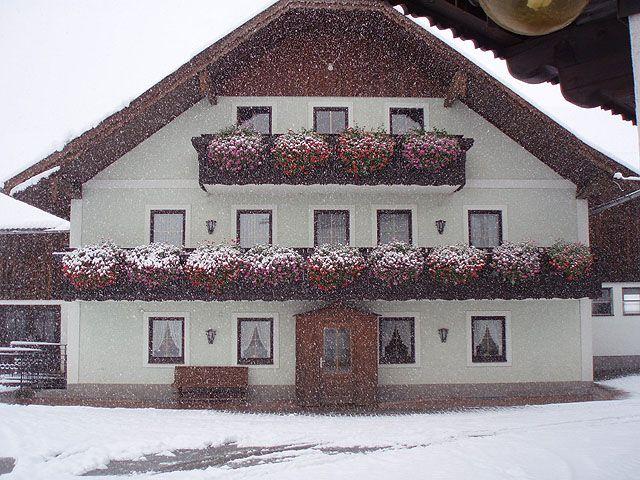 Erster Schneefall mit Blumen am Bauernhaus - Biobauernhof Seemanngut Faistenau