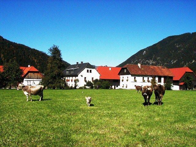 Urlaub_am_Bauernhof_Peterhof - BABY & KINDERBAUERNHOF PETERHOF FAMILIENURLAUB Hinterstoder