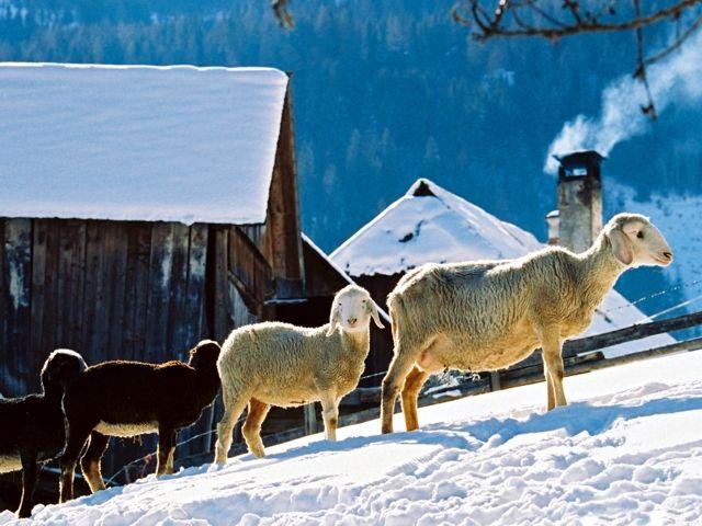 Winter pur am Bauernhof in der Steiermark - Urlaub am Bauernhof Steiermark