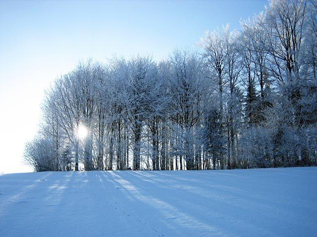 Lassen Sie sich von der verträumten Winterlandschaft verzaubern und genießen Sie Natur pur in Leopoldschlag - Leopoldschlag Oberoesterreich