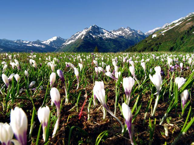 Auch auf den Höhen rund um St. Anton am Arlberg erleben Wanderer Fauna und Flora in all ihrer faszinierenden Vielfalt. - St. Anton am Arlberg Region Tirol