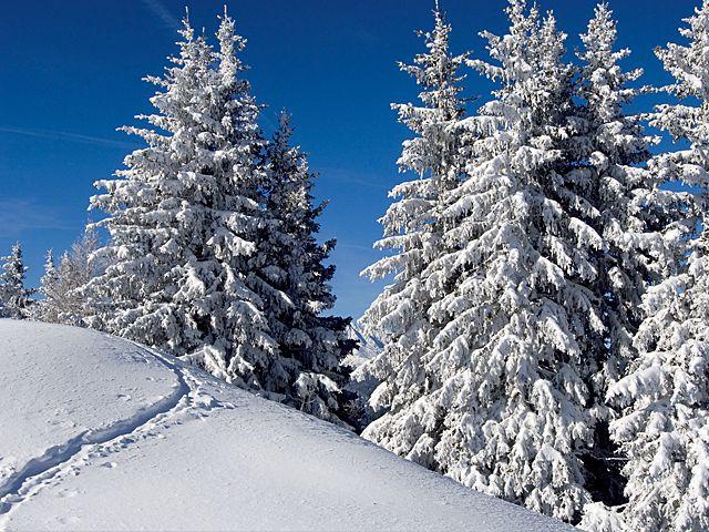 Winterspaziergang - Kematen Tirol