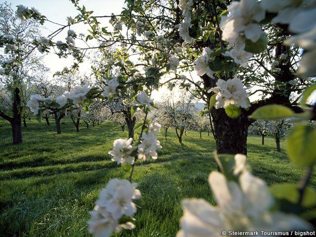 Frühling in der Steiermark - Steiermark