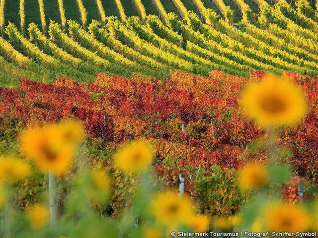 Weinanbau in der Steiermark - Steiermark