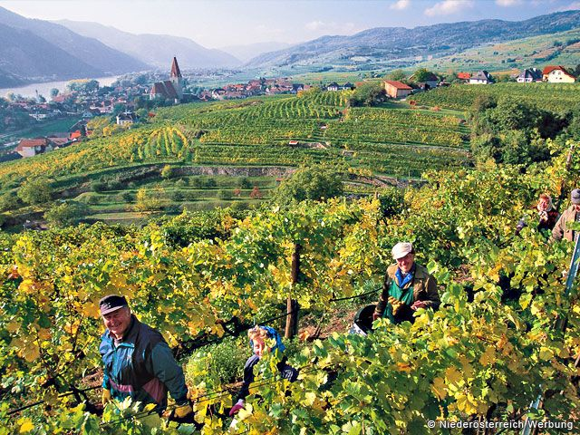 Weinanbau in Niederösterreich - Austria Inferioara