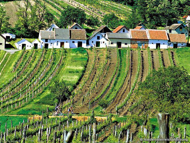 Weinkultur und Weinberge in Niederösterreich - Niederoesterreich