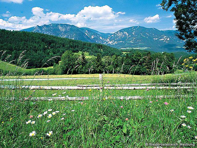 unberührte Natur in Niederösterreich - Niederoesterreich