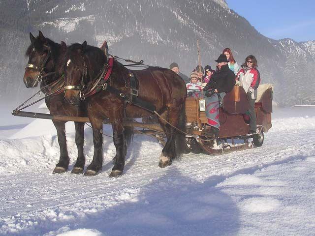 Als Alternative und gemtlicher Ausgleich zum alpinen Skisport bietet die Region einiges. Zum Beispiel eine kuschelige Pferdeschlittenfahrt! - Dachstein Salzkammergut Oberoesterreich