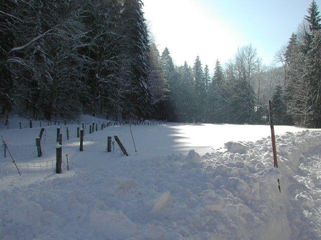 Lassen Sie sich bei einem Winterspaziergang von der Ruhe und Schönheit der Natur verzaubern. - Scharnstein Oberoesterreich