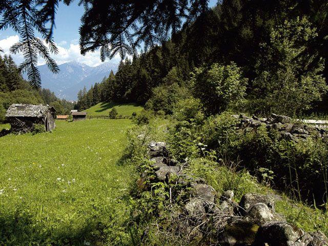 Grüne Wiesen in Grinzens - Grinzens Tirol