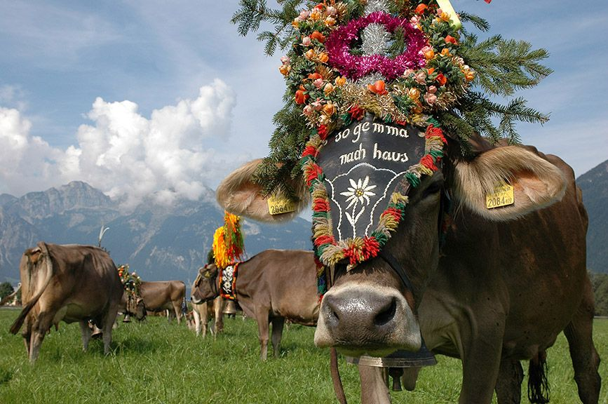 Almabtrieb - © Tirol Werbung/Bernhard Aichner - Tirol