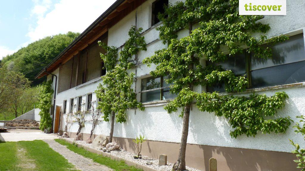 View from outside In summer - Ferien auf dem Bauernhof Rabenreith Großraming