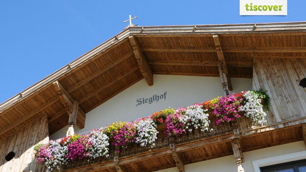 View from outside In summer - Sieglhof Breitenbach